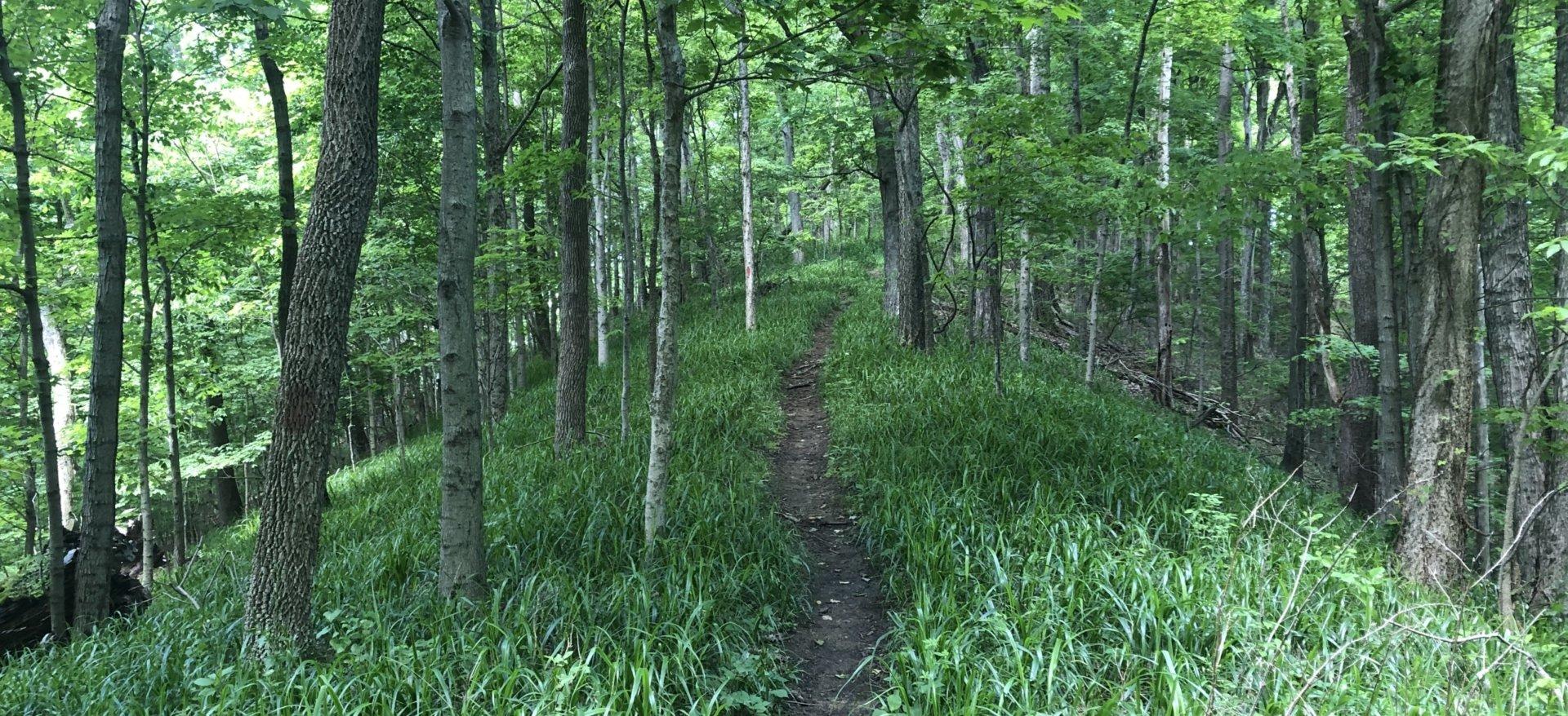 Scotts Gap - Red Trail