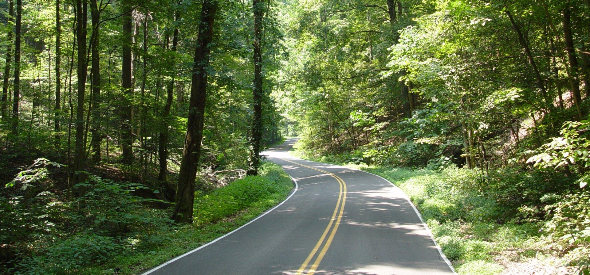 Jefferson Memorial Forest - Tree Lined Roadway